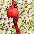 Cardinal In Dogwood by Michael Scherer