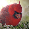 Cardinal In Flowers by Debbie Portwood