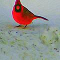 Cardinal In Winter by Kenneth Krolikowski