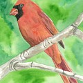 Cardinal by Kimberly Lavelle