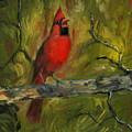 Cardinal by Liz Rose