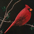 Cardinal by Mickey Clogher