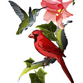 Cardinal On Ivy Branch With Hummingbird And Pink Lily by MM Anderson