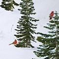 Cardinal Trees by Lozja Mattas