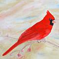 Cardinal Watching by Laurel Best