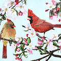 Cardinals And Apple Blossoms by Johanna Lerwick
