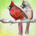 Cardinals by Sean Parnell