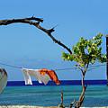 Caribbean Blues 3 by Bob Christopher