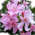Caribbean Oleander by Marie Hicks