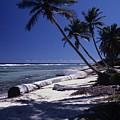 Caribbean Paradise by Don Kreuter