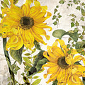 Carina Sunflowers by Mindy Sommers