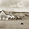 Carmel Mission Circa 1920 by California Views Archives Mr Pat Hathaway Archives