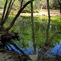 Carmel River At Gilmore Ranch by Joyce Dickens