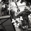 Carmen Valencia Courtyard by For Ninety One Days