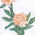 Carnation Flower by Sara Alhajeri