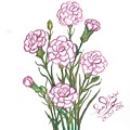 Carnation Pink by Sara Alhajeri