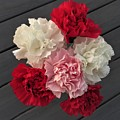 Carnations by Scenic Sights By Tara