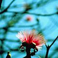 Carolina Flower And Bird by Luciano Comba