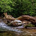 Carolina Stream by Christopher Holmes