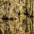 Carolina Swamp by DiFigiano Photography
