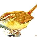 Carolina Wren On Bird Feeder Animal Portrait by A Gurmankin