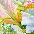 Carols-iris-i by Nancy Newman
