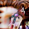 Carousel Horse Portrait by Garry Gay