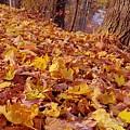 Carpet Of Fall Leaves by Deb Rassel
