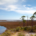 Carrabelle Salt Marshes by Rich Leighton
