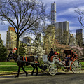Carriage Ride In Central Park by Nick Zelinsky
