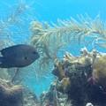 Carribean Sea Life by Gina Sullivan