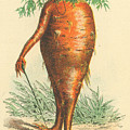 Carrot Gentleman by Artist from the past
