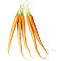 Carrots by Fran Henig