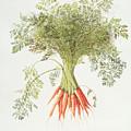 Carrots by Margaret Ann Eden
