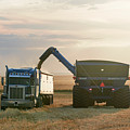 Cart Into Truck by Todd Klassy