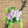 Carte Postale. Blossoming Apple by Masha Batkova
