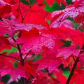 Cascade Autumn Leafs 2 by Noah Cole