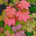 Cascade Autumn Leafs 4 by Noah Cole