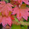 Cascade Autumn Leafs 5 by Noah Cole