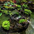 Cascades Fountains by Onyonet  Photo Studios