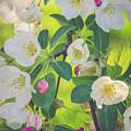 Cascading Flowers by Debbie Gracy