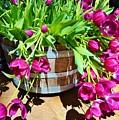 Cascading Purple Tulips  by Cherie Cokeley