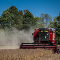 Case Ih Bean Harvest by Ron Pate