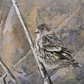 Cassin's Sparrow by Susan Bruner