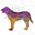 Castro Laboreiro Dog In Watercolor by Pablo Romero