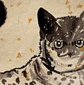 Cat 3 by Santhosh Ch