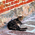 Cat Against Stone by Susan Savad