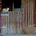 Cat And Barn by George Sanquist