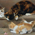 Cat And Kittens Chasing A Mouse   by Rosa Jameson