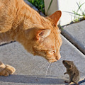 Cat And Mouse by Wesley Aston